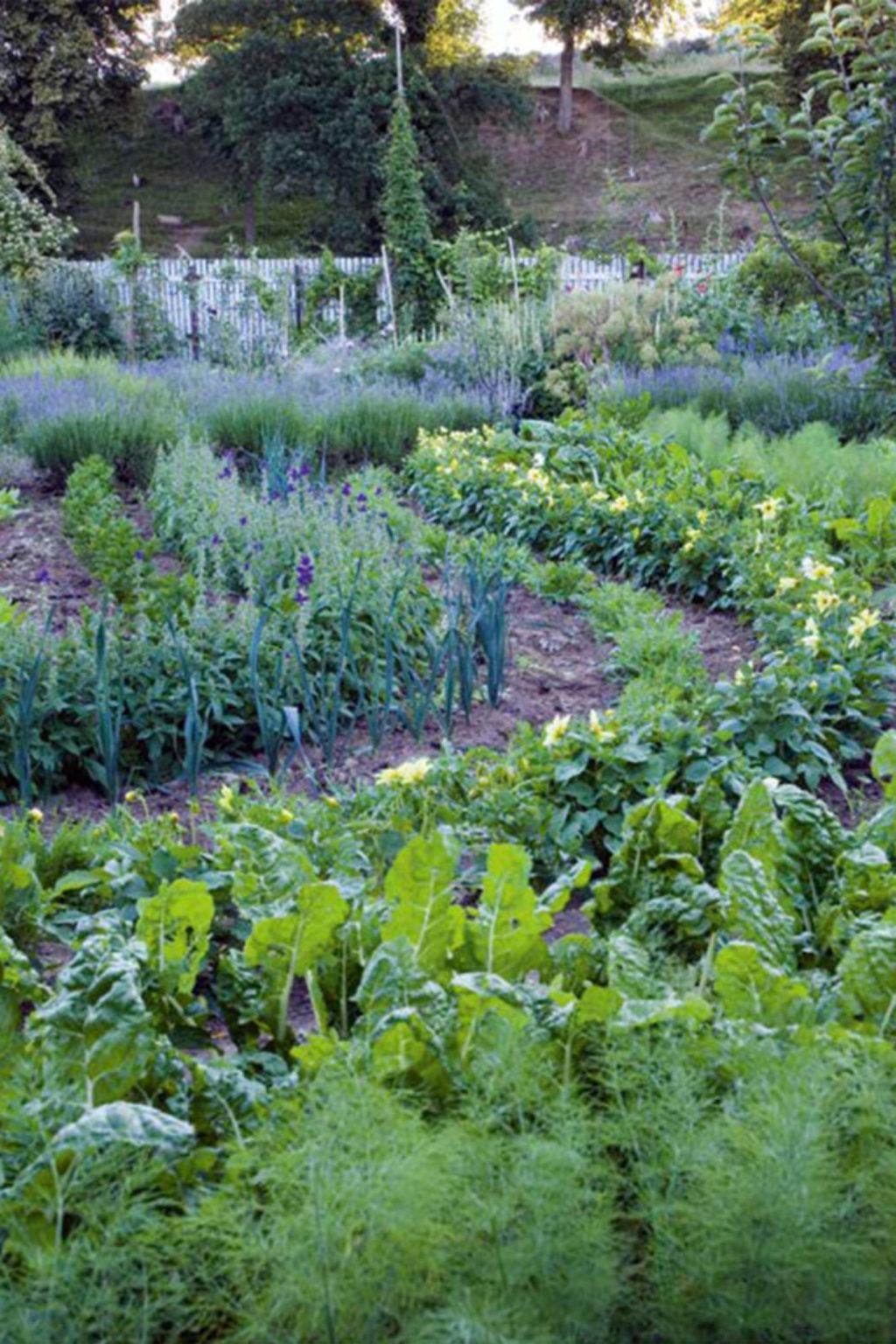 Apothecary Garden Companion Planting