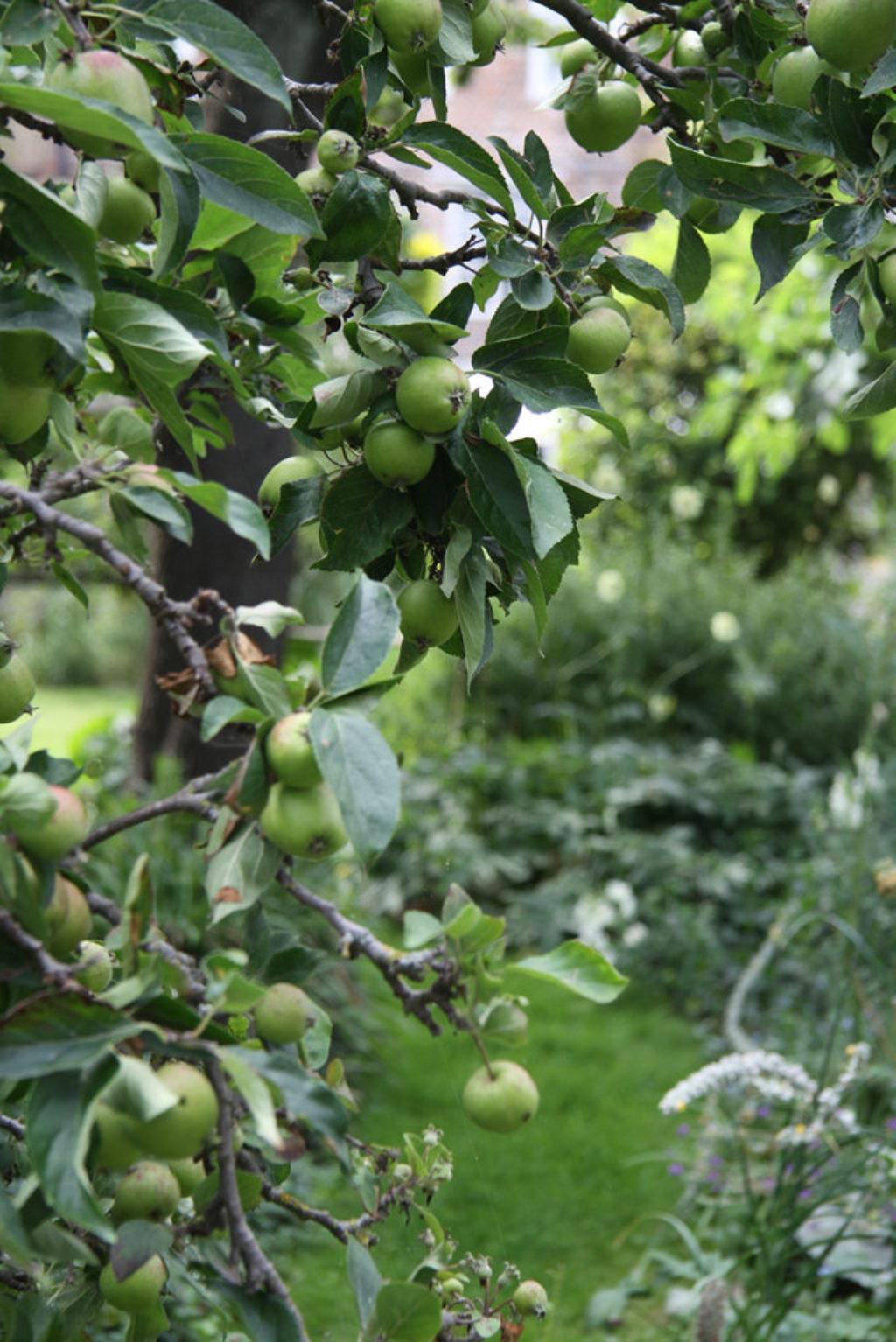 Apothecary Garden Fruit
