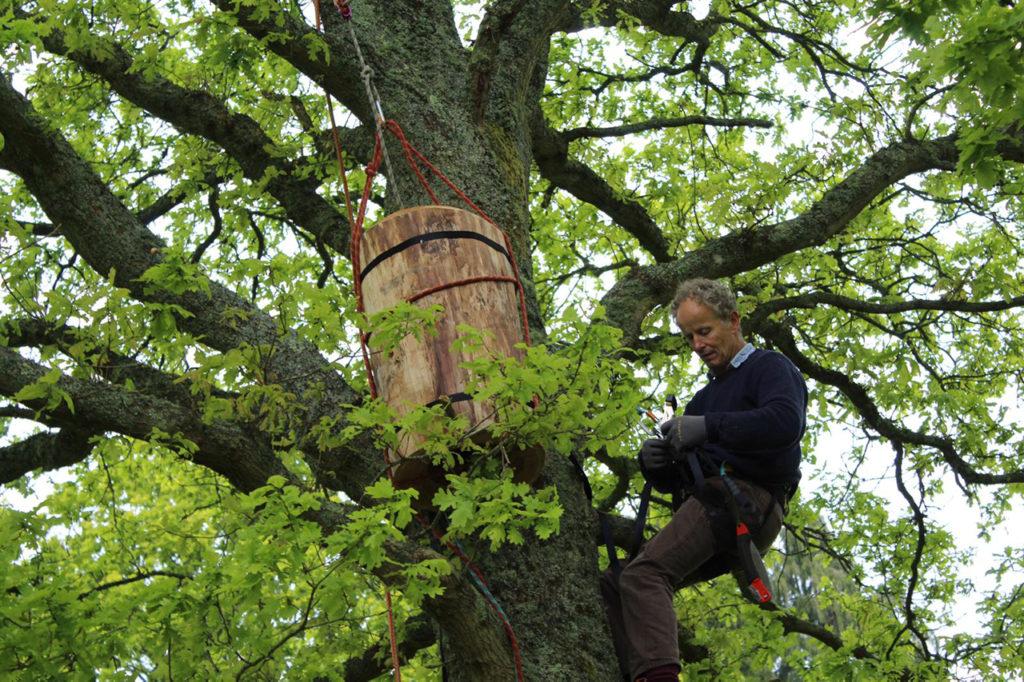 Beehives Preparation Tree