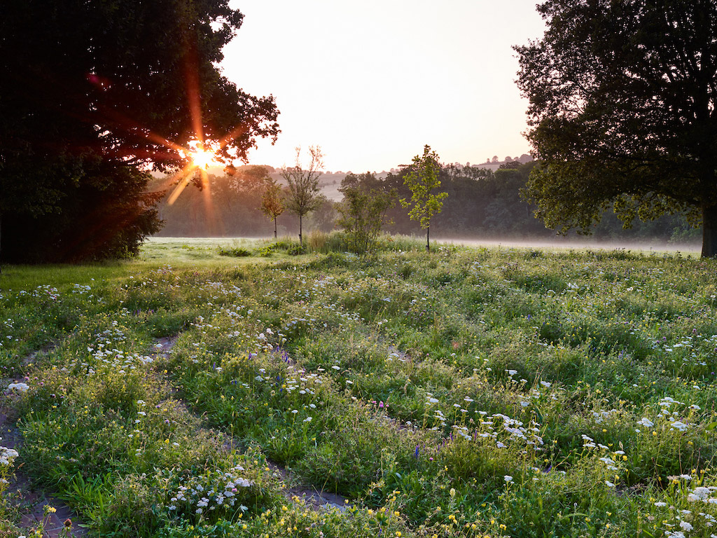 Sussex Garden3