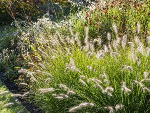 Amazing Landscape Gardening Sussex