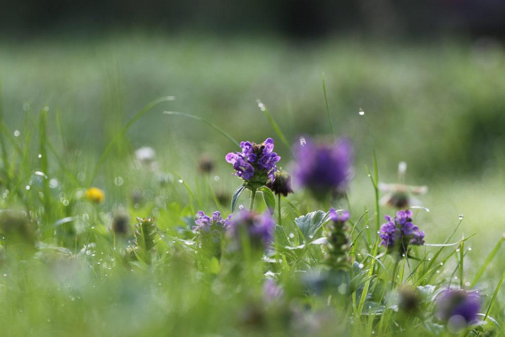 Apothecary Garden Plants