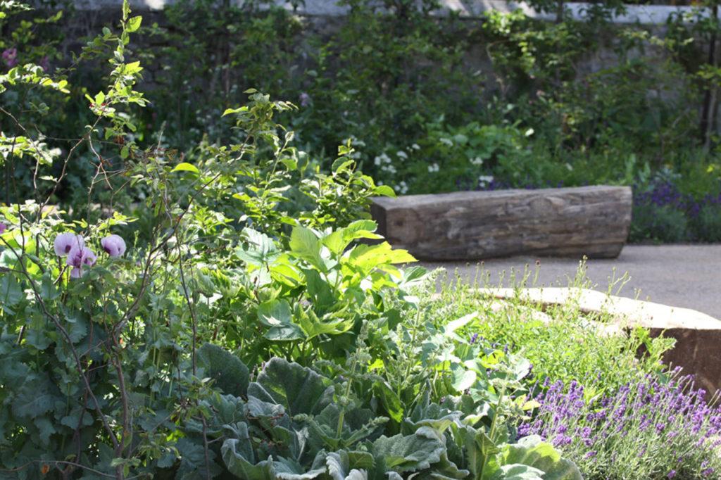 Blackthorn Healing Bench