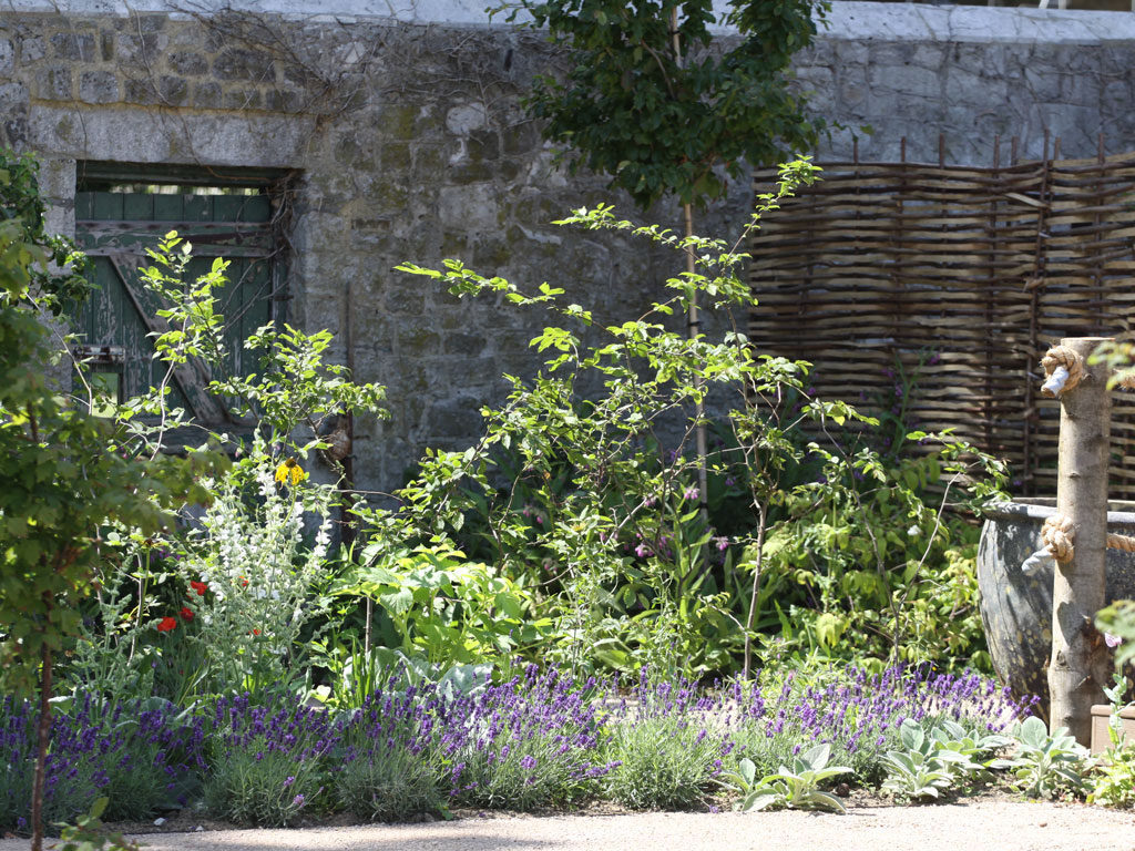 Blackthorn Healing Lavender