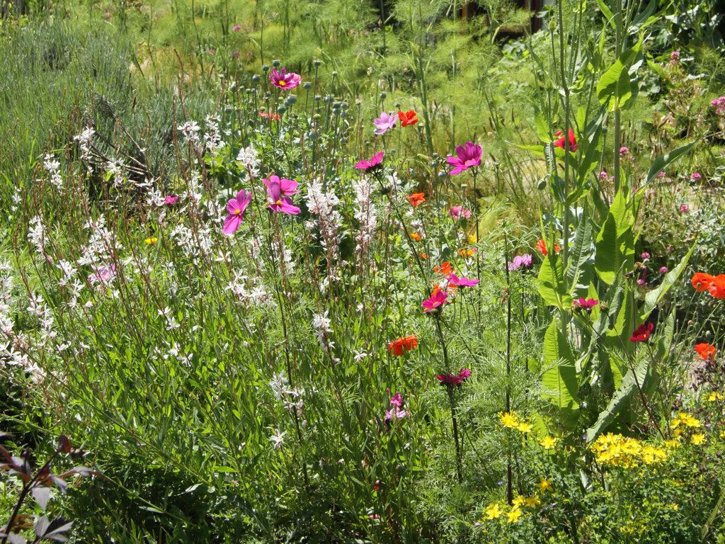 Blackthorn Healing Planting