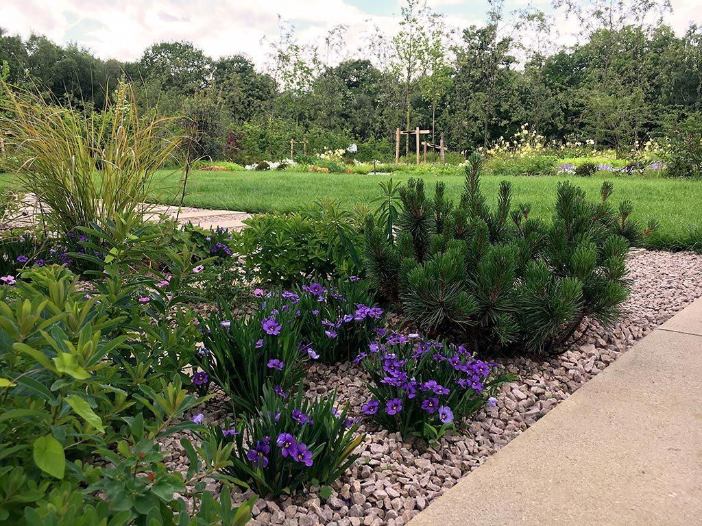 Contemporary Landscape Planting