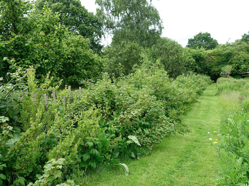 Edible Hedge Wild