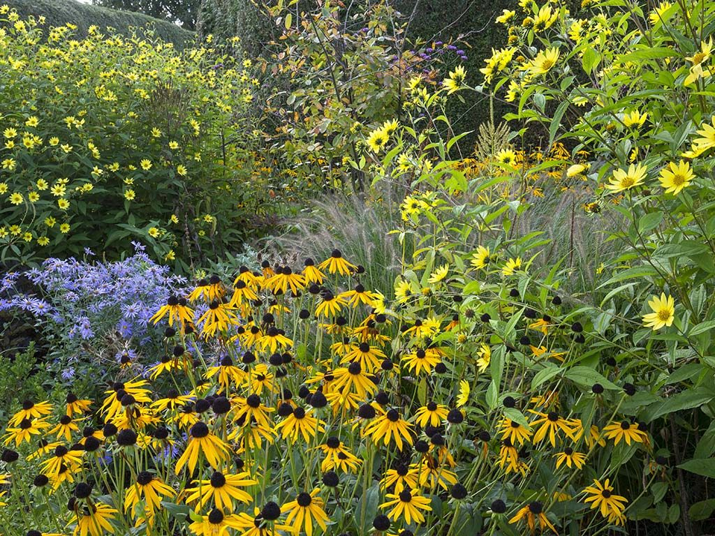 Garden Design Sussex