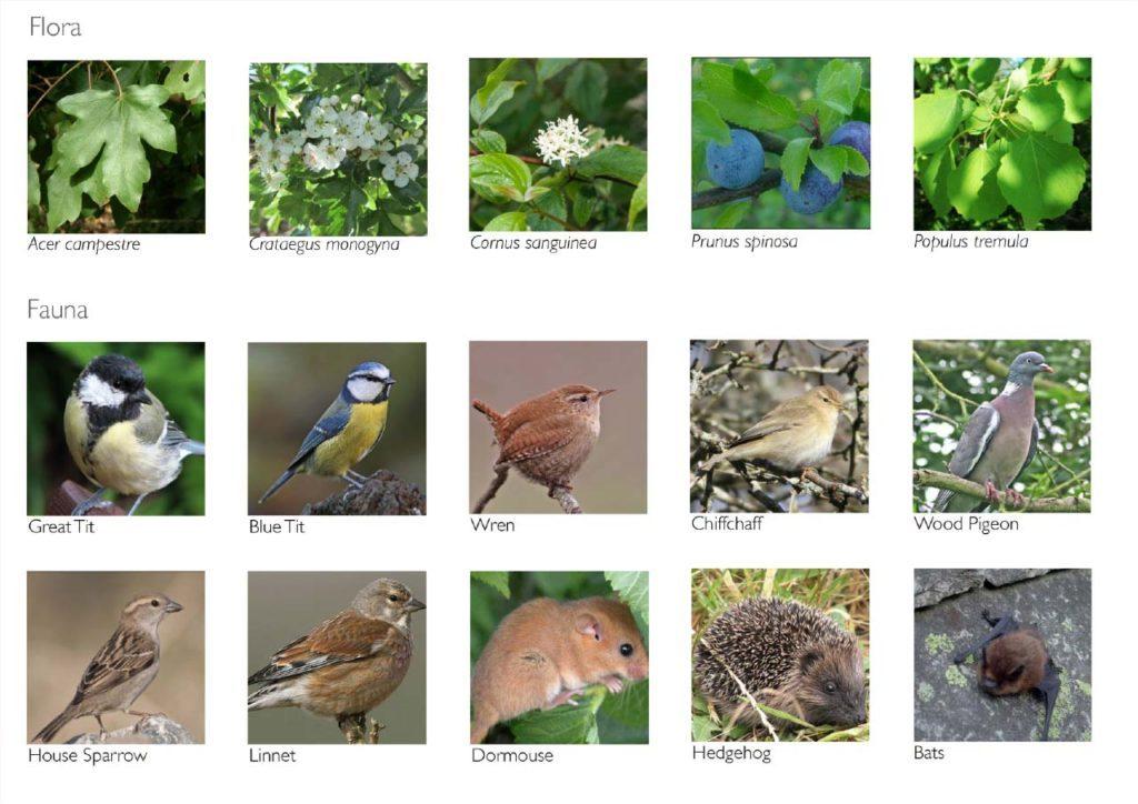 Hedging Flora and Fauna