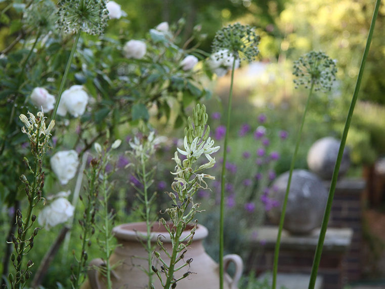 Herbaceous Gardens By Marian Boswall