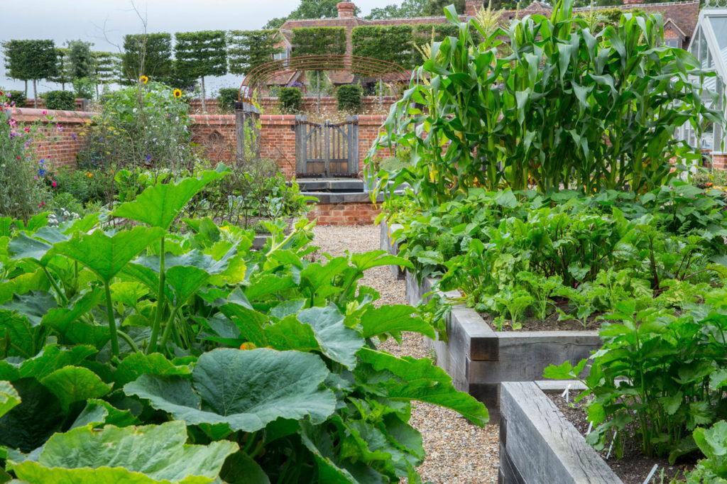 Raised Planter Kitchen Garden