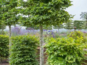 Walled Country Garden Design