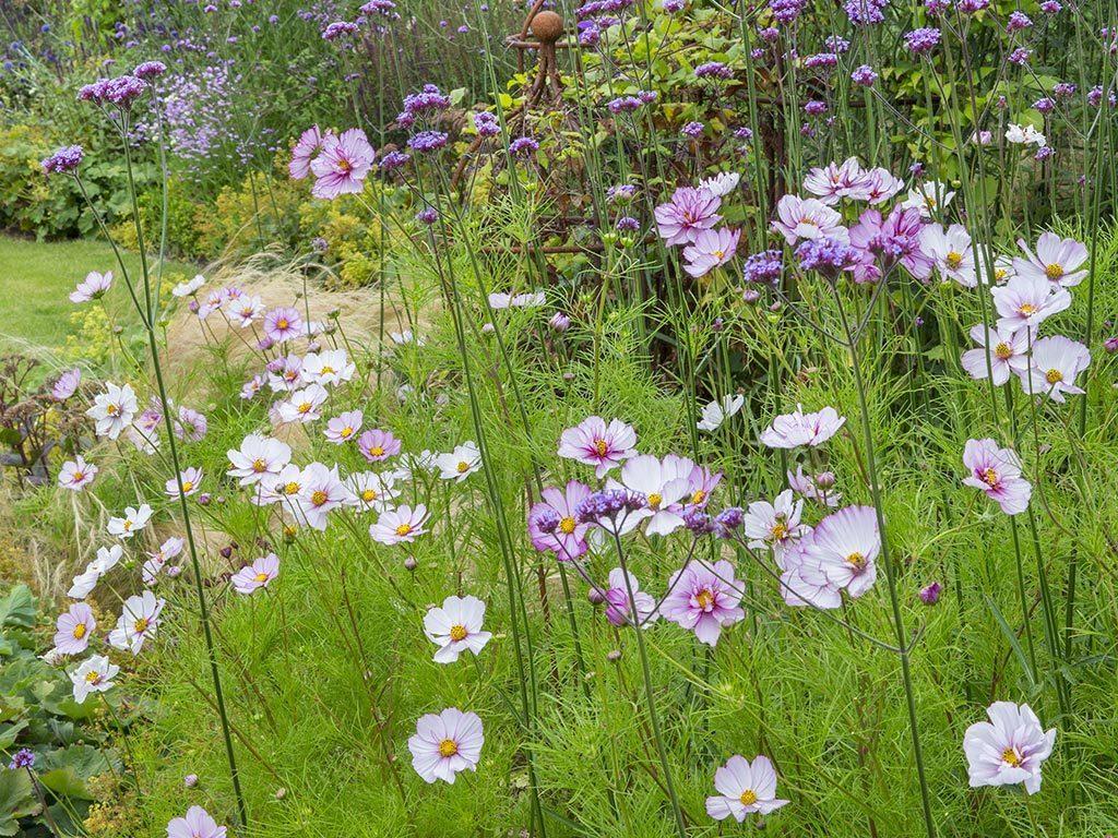 Wildflower Meadow Design Kent