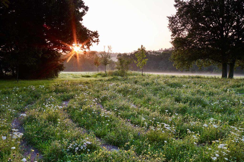 Wildflower Sunset Danegate